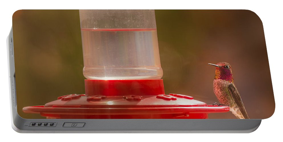 Anna's Hummingbird Portable Battery Charger featuring the photograph Who Is Watching Who by Onyonet Photo Studios