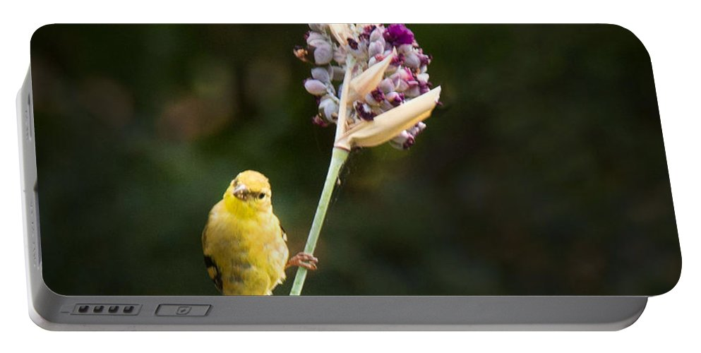 Bird Portable Battery Charger featuring the photograph Who Says I Cant Stand Here by Jean Noren