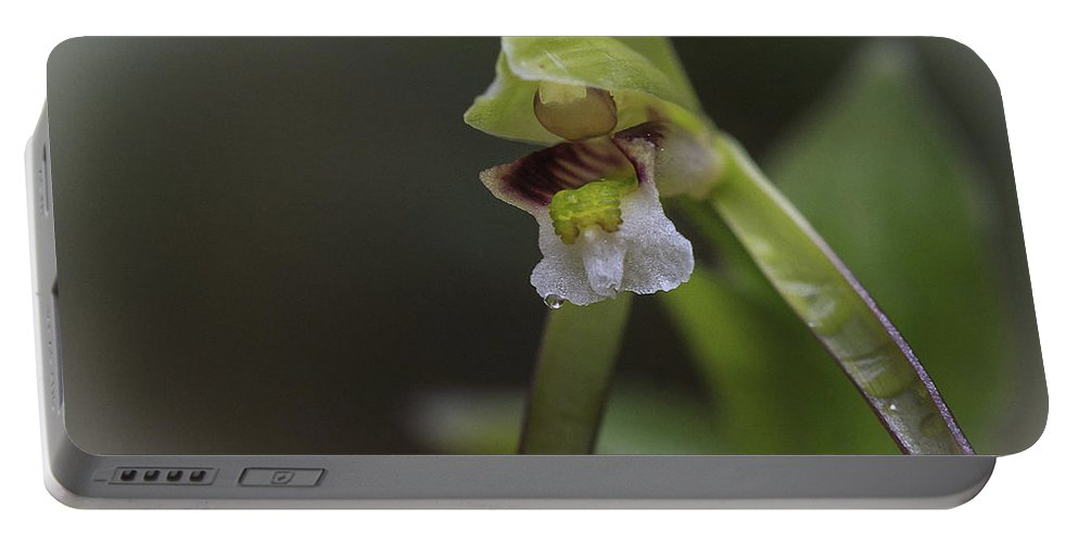 Flower Portable Battery Charger featuring the photograph Whorled Pogonia by Jack R Perry