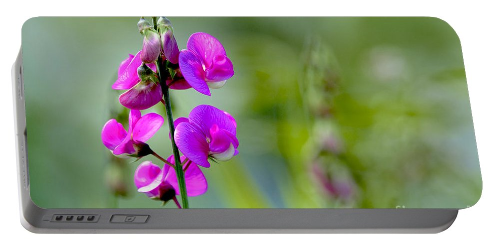 Wild Pea Portable Battery Charger featuring the photograph Wild Everlasting Pea by Sharon Talson