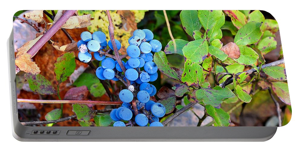 Fox Grapes Portable Battery Charger featuring the photograph Wild Grapes by Todd Hostetter