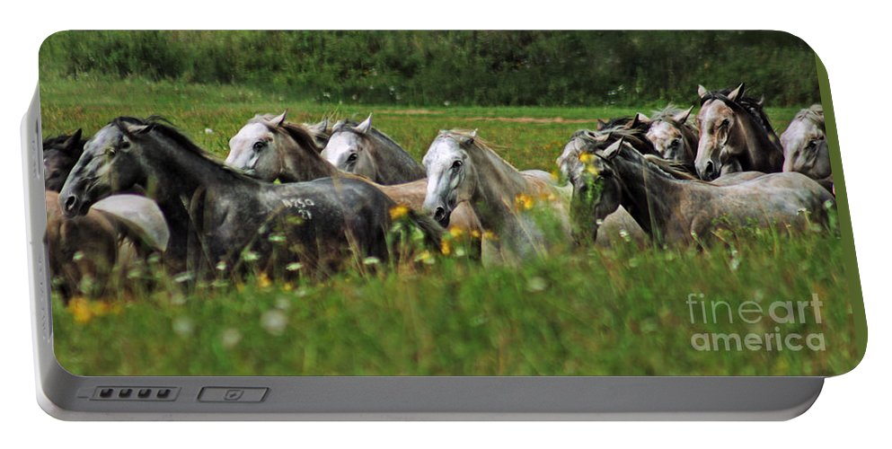Horse Portable Battery Charger featuring the photograph Wild Horses by Angel Ciesniarska