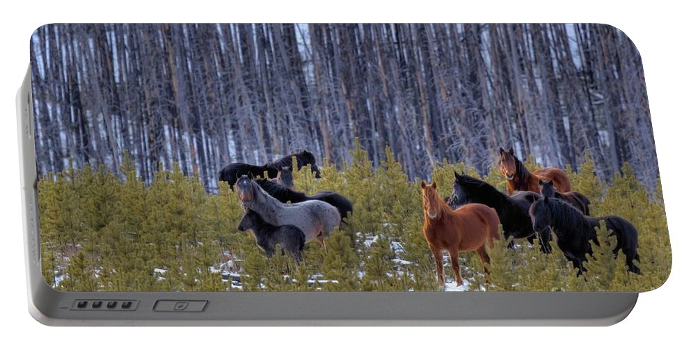 Wild Horses Portable Battery Charger featuring the photograph Wild Horses Of The Ghost Forest by James Anderson