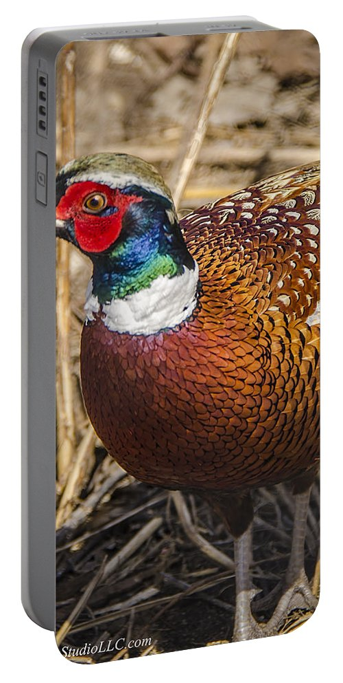 Pheasant Portable Battery Charger featuring the photograph Wild Pheasant by LeeAnn McLaneGoetz McLaneGoetzStudioLLCcom