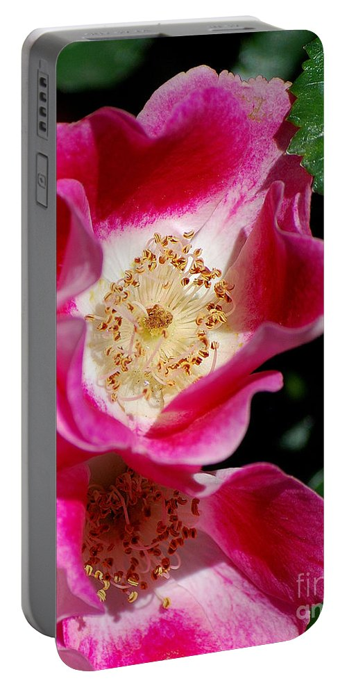 Rose Portable Battery Charger featuring the photograph Wild Rose by Sharon Elliott