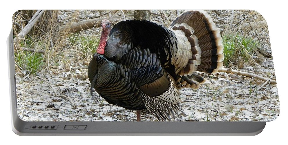 Animal Portable Battery Charger featuring the photograph Wild Turkey Mnt Zion Ut by Margarethe Binkley