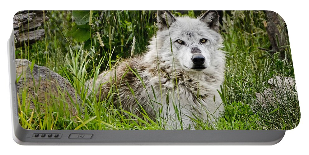Wolf Portable Battery Charger featuring the photograph Wild Wolf by Jon Berghoff