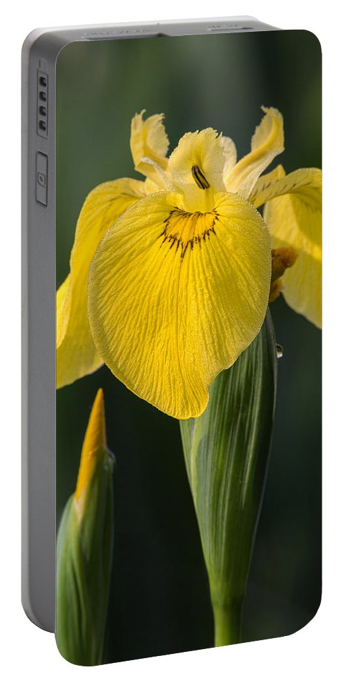 Wild Yellow Iris Portable Battery Charger featuring the photograph Wild Yellow Iris by Dale Kincaid