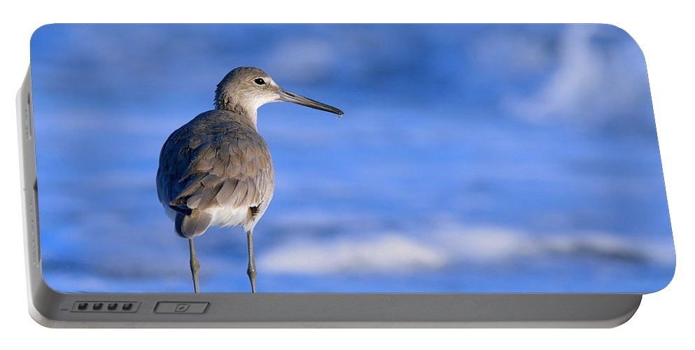 Bird Portable Battery Charger featuring the photograph Willet In The Water by Heather Pickard