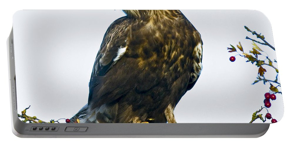Hawk Portable Battery Charger featuring the photograph Wind Blown by Rob Mclean