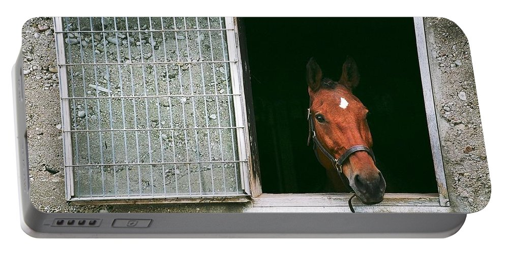 Horse Portable Battery Charger featuring the photograph Window View by David Porteus