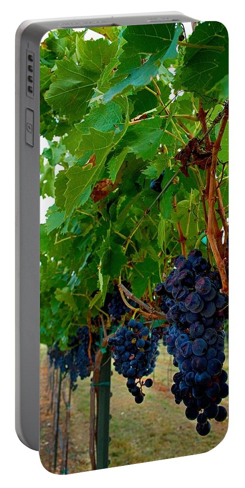 Winery Print Portable Battery Charger featuring the photograph Wine Grapes On The Vine by Kristina Deane