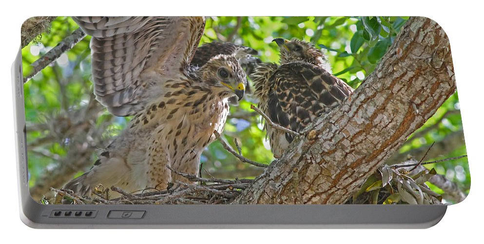 Hawks Portable Battery Charger featuring the photograph Wing Test by Deborah Benoit