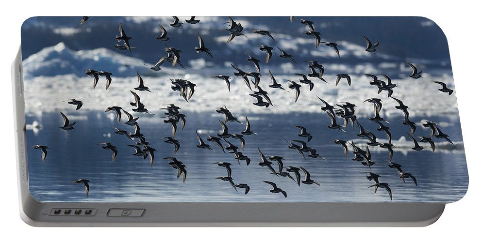 Sandpiper Portable Battery Charger featuring the photograph Wings by Ted Raynor