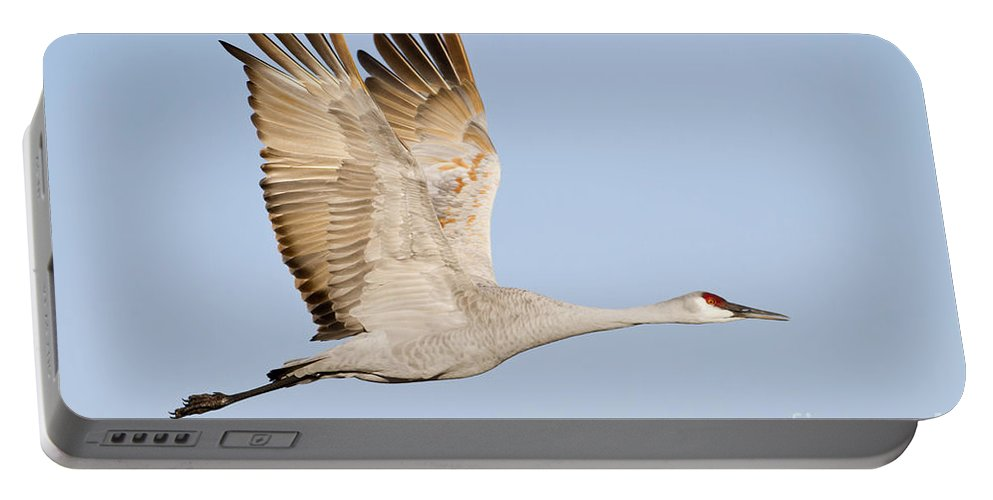 Sandhill Crane Portable Battery Charger featuring the photograph Wings Up by Bryan Keil