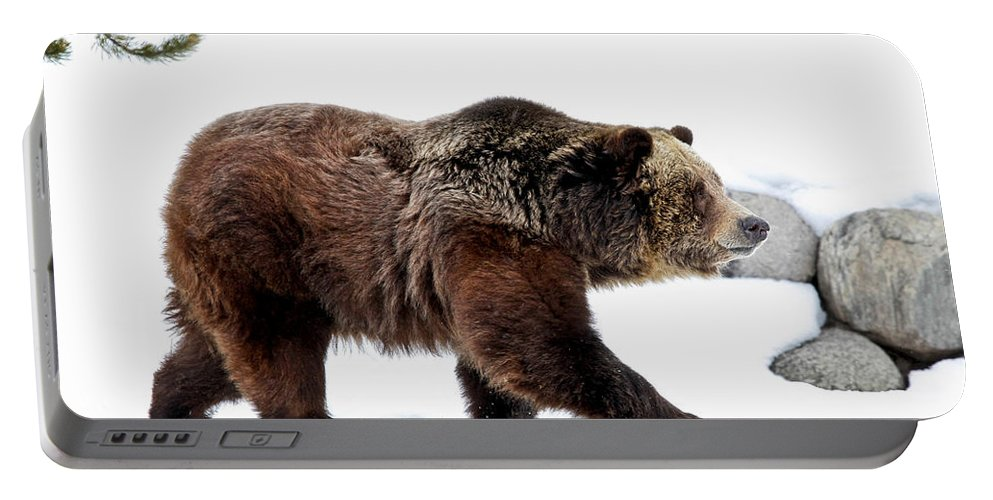 Grizzly Portable Battery Charger featuring the photograph Winter Bear Walk by Athena Mckinzie
