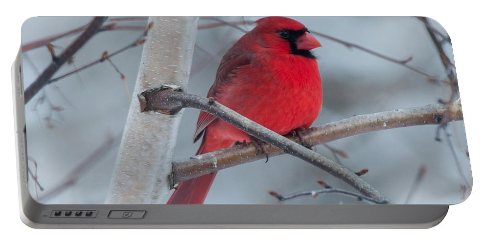 Bird Portable Battery Charger featuring the photograph Winter Cardinal by Richard Kitchen
