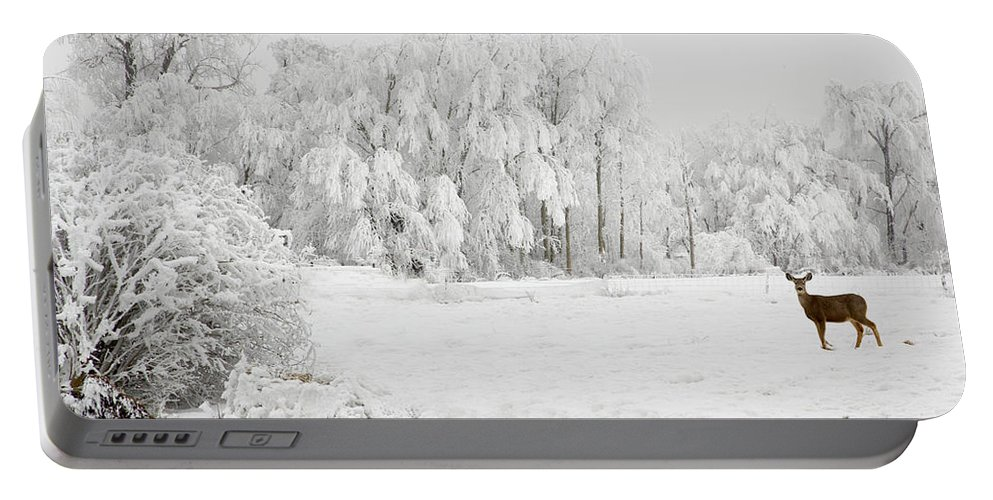 Hoar Portable Battery Charger featuring the photograph Winter Doe by Mary Jo Allen