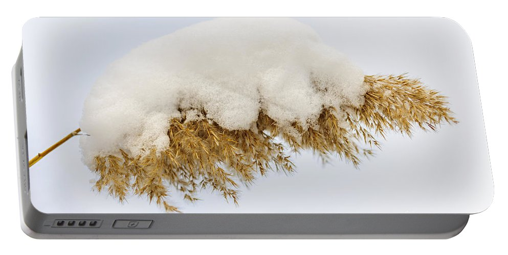 Reed Portable Battery Charger featuring the photograph Winter Reed Under Snow by Elena Elisseeva