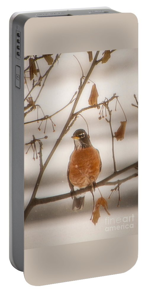 Winter Portable Battery Charger featuring the photograph Winter Robin by Grace Grogan