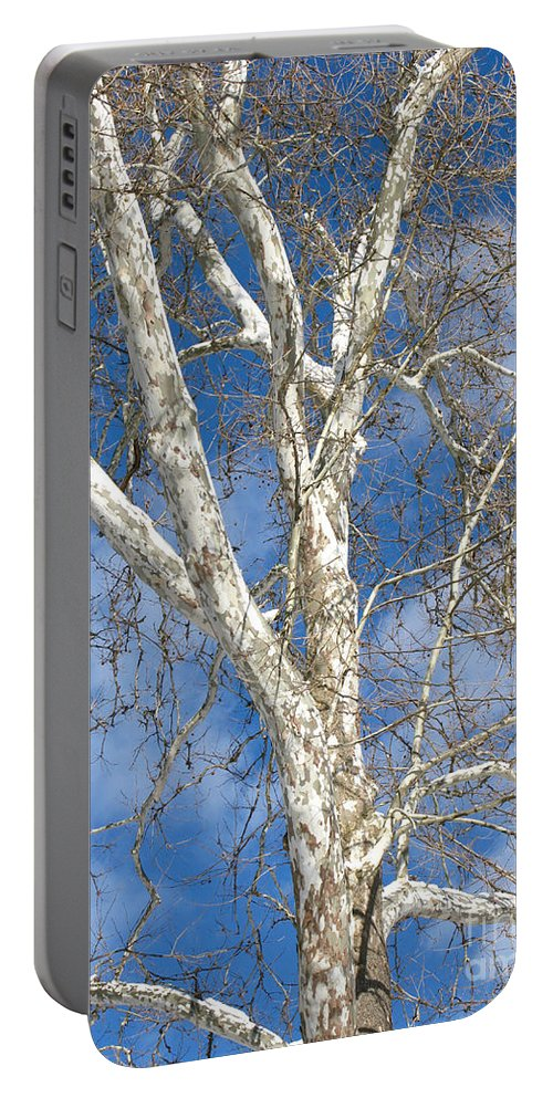 Winter Portable Battery Charger featuring the photograph Winter Sycamore by Ann Horn