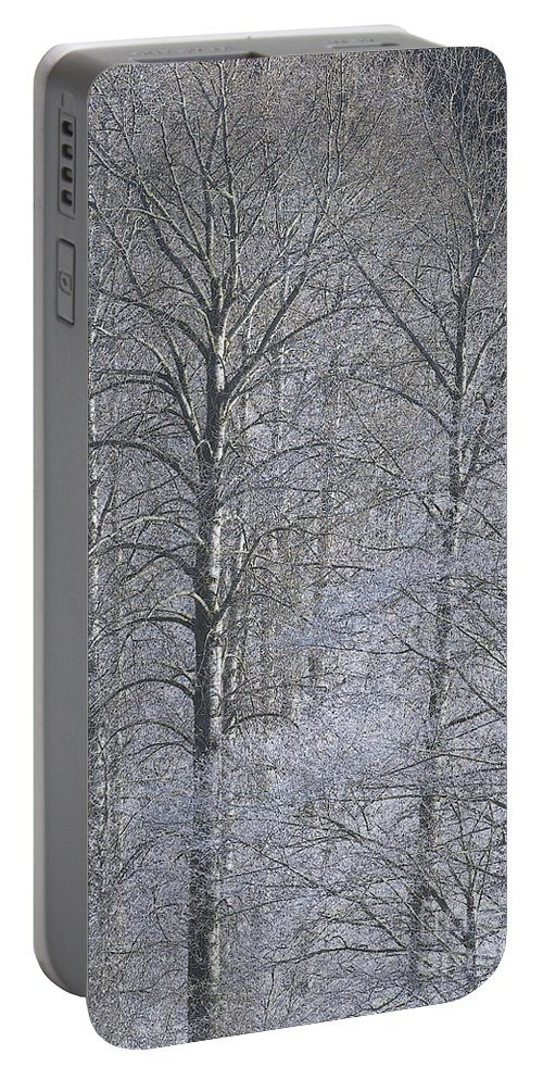 Winter Portable Battery Charger featuring the photograph Winter Trees by Sharon Talson
