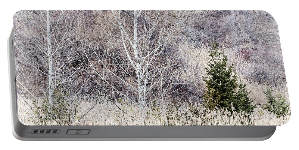 Trees Portable Battery Charger featuring the photograph Winter Woodland With Subdued Colors by Elena Elisseeva