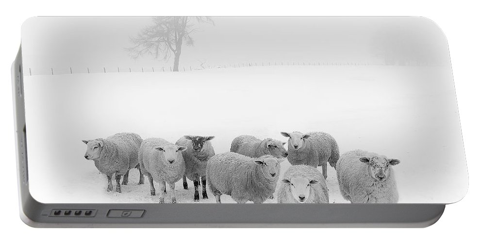 Sheep In Winter Portable Battery Charger featuring the photograph Winter Woollies by Janet Burdon