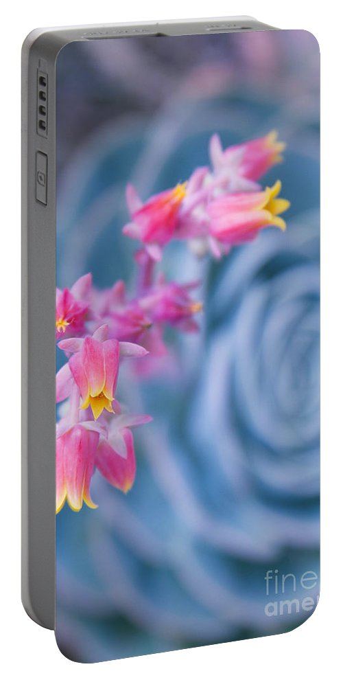 Aloha Portable Battery Charger featuring the photograph with affection - Echeveria glauca by Sharon Mau