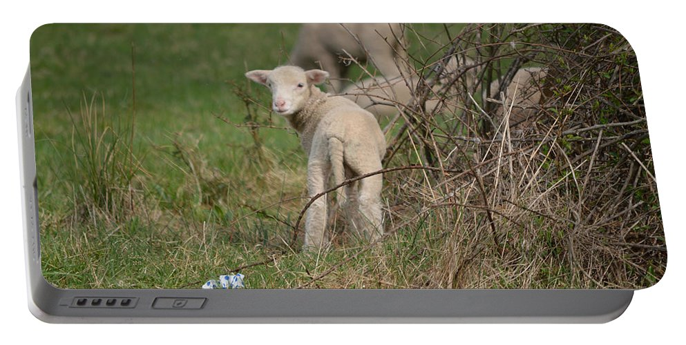 Sheep Portable Battery Charger featuring the mixed media Wittle Wamb by Trish Tritz