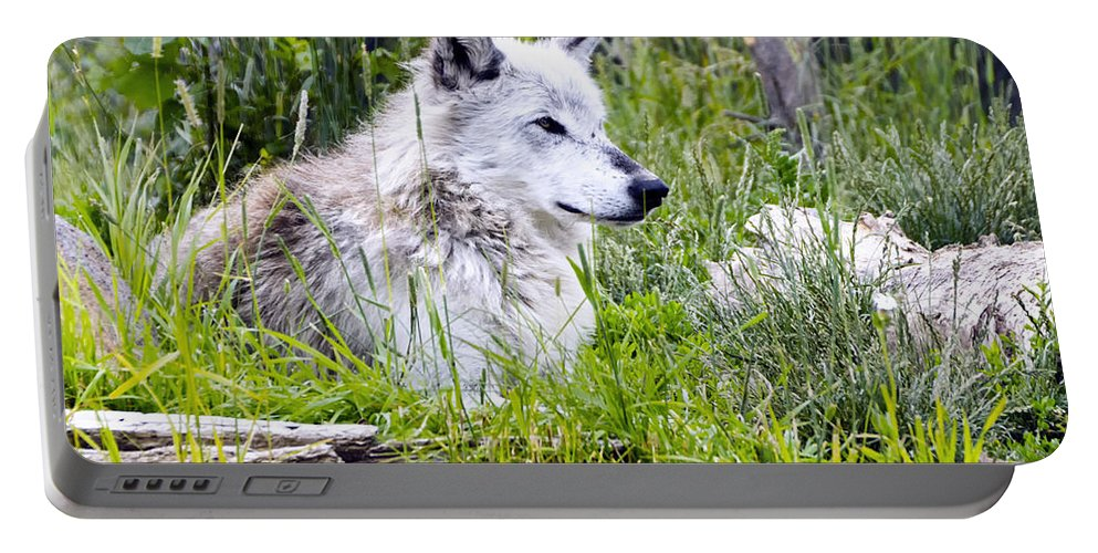 Wolf Portable Battery Charger featuring the photograph Wolf In The Grass by Jon Berghoff