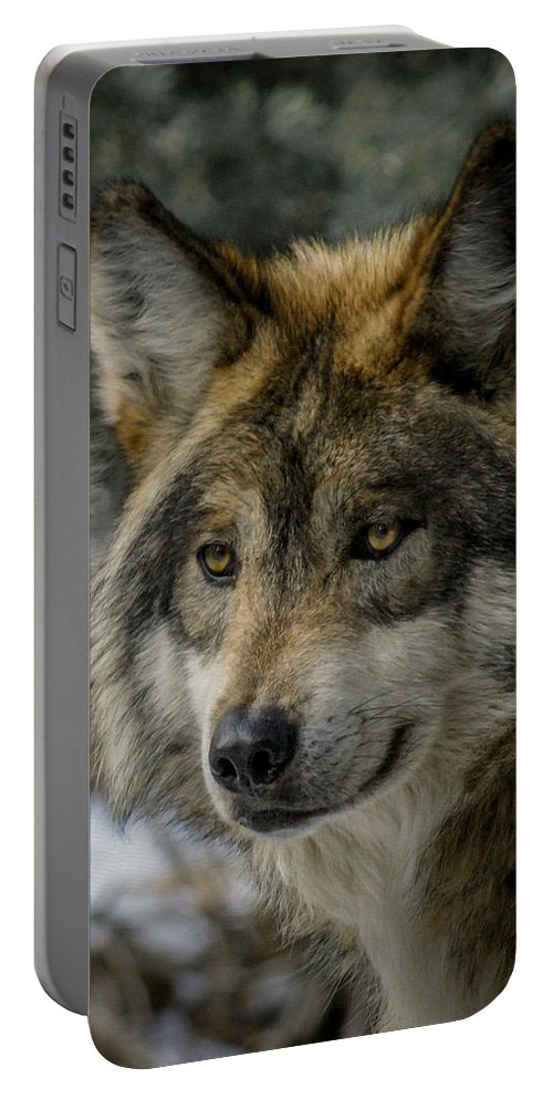 Wolf Portable Battery Charger featuring the photograph Wolf Upclose 2 by Ernie Echols