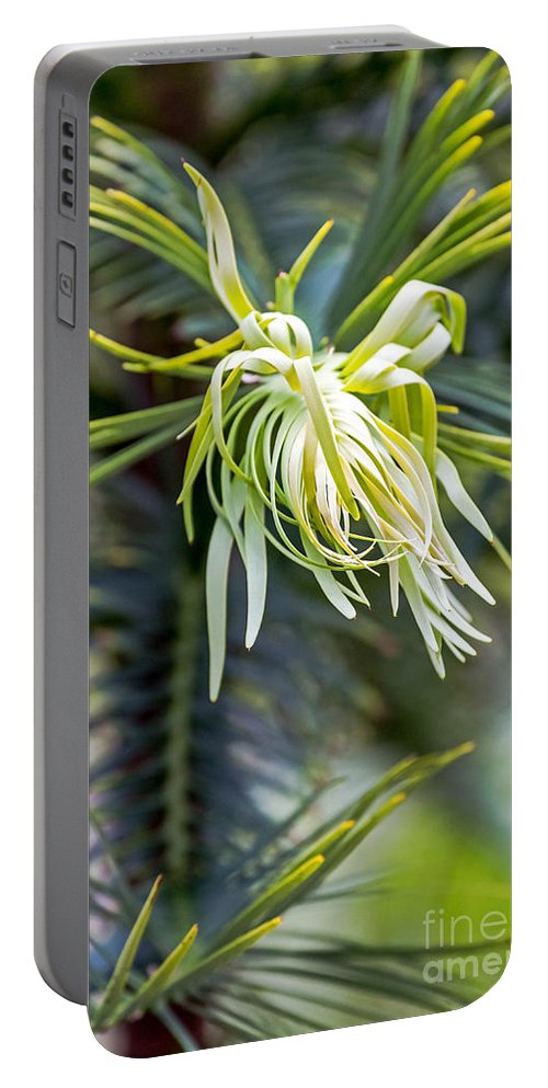Australia Portable Battery Charger featuring the photograph Wollemi Pine by Kate Brown