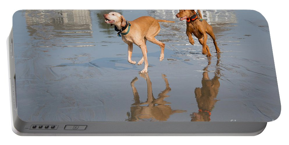 Dog Portable Battery Charger featuring the photograph Woo Hoo - It's A Beach Day by Mary Koenig Godfrey