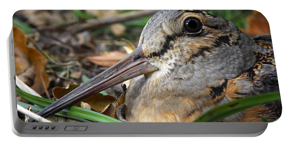 Woodcock Portable Battery Charger featuring the photograph Woodcock Beak Close Up by Timothy Flanigan