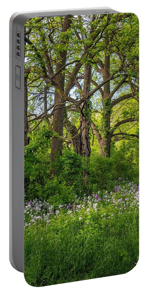 Bolton Portable Battery Charger featuring the photograph Woodland Phlox 2 by Steve Harrington