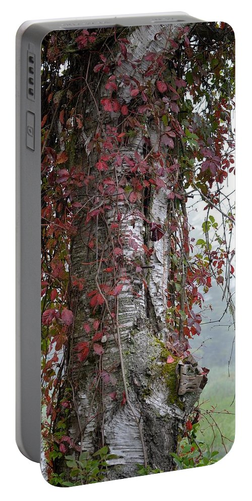 White Birch Portable Battery Charger featuring the photograph Woodvine by Thomas Phillips