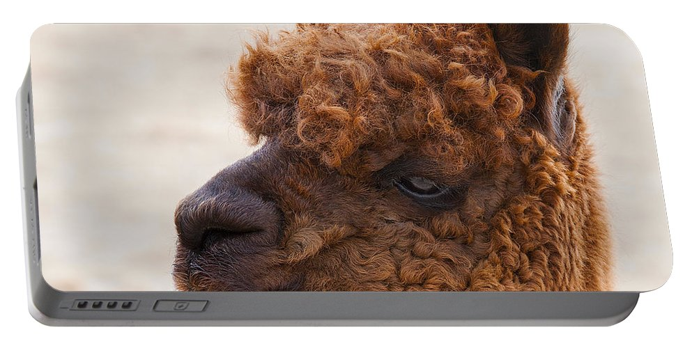 Alpaca Photographs Portable Battery Charger featuring the photograph Woolly Alpaca by Jerry Cowart