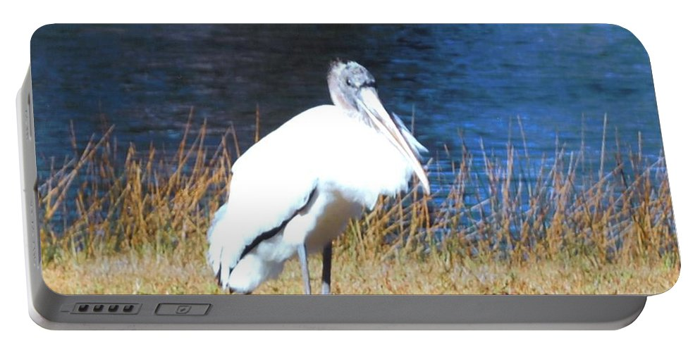 Resting On His Knees At Lakes Park In Ft.myers Portable Battery Charger featuring the photograph Wordstork by Robert Floyd