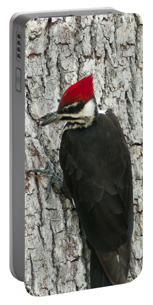 Florida Portable Battery Charger featuring the photograph Working Woodpecker by Stephen Whalen