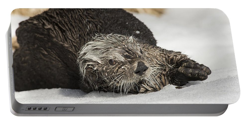 Otter Portable Battery Charger featuring the photograph Worried by Ted Raynor