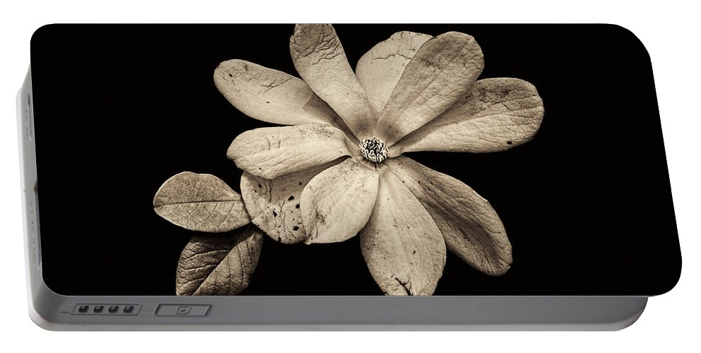 Wounded White Magnolia Portable Battery Charger featuring the photograph Wounded White Magnolia Wide Version Sepia by Weston Westmoreland