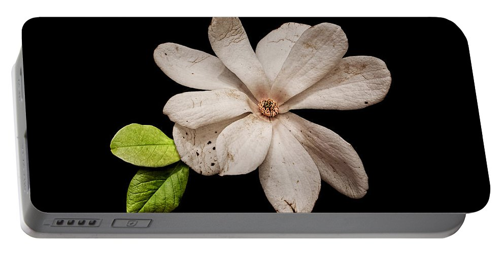 Wounded White Magnolia Portable Battery Charger featuring the photograph Wounded White Magnolia Wide Version by Weston Westmoreland