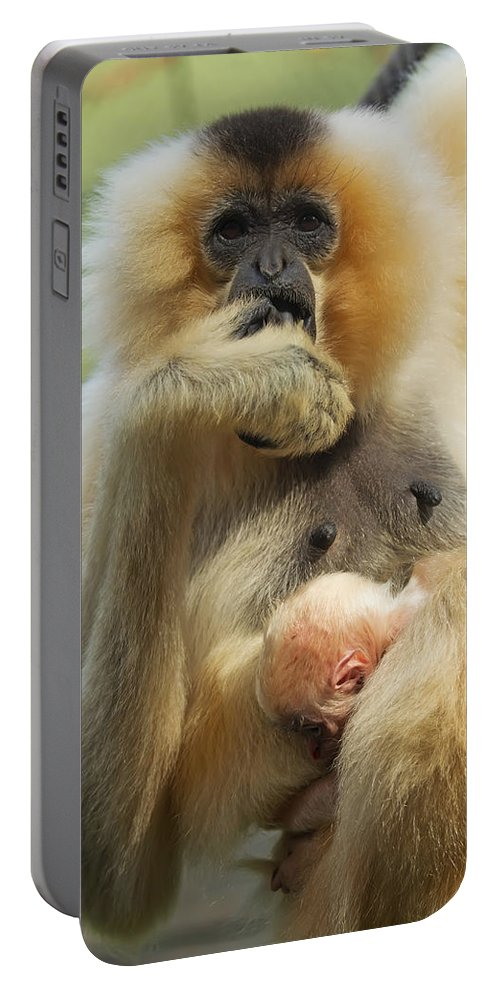 Motherhood Portable Battery Charger featuring the photograph Wow. I Have A Baby by Jaroslav Frank