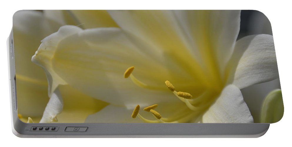 Floral Portable Battery Charger featuring the photograph Yellow 8713 by Terri Winkler