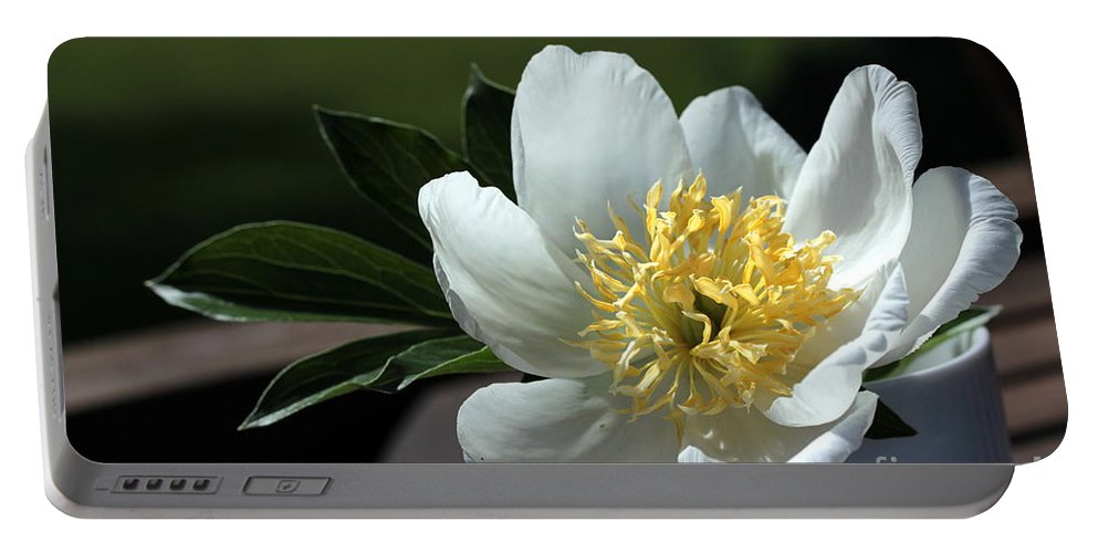 Peony Portable Battery Charger featuring the photograph Yellow And White Peony Flower by Kenny Glotfelty