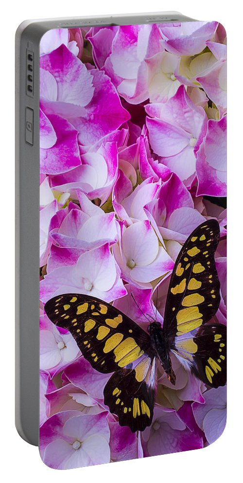 Yellow Black Portable Battery Charger featuring the photograph Yellow Black Butterfly On Hydrangea by Garry Gay