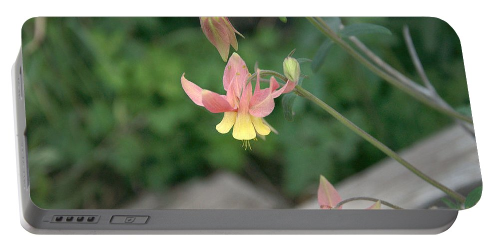 Yellow Portable Battery Charger featuring the photograph Yellow Columbine 2 by Frank Madia