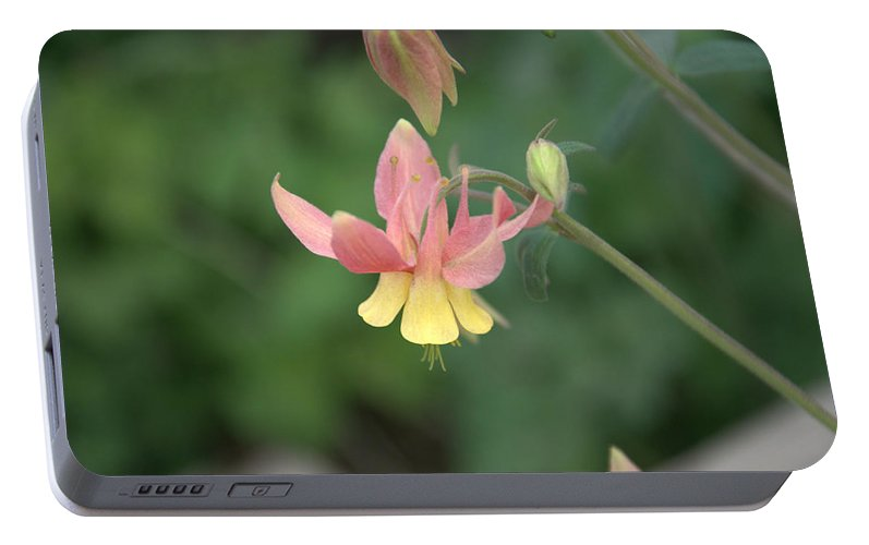 Flower Portable Battery Charger featuring the photograph Yellow Columbine by Frank Madia