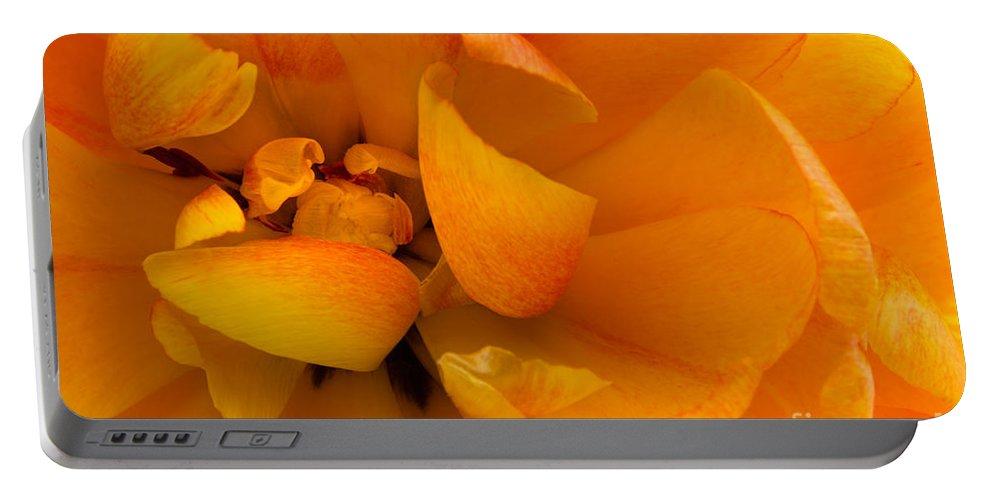 Ann Garrett Portable Battery Charger featuring the photograph Yellow Double Tulip by Ann Garrett